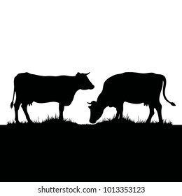 Vector silhouette of two cows. Farm animals on grass pastures.