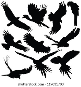 Vector silhouettes of bird silhouettes on white background.