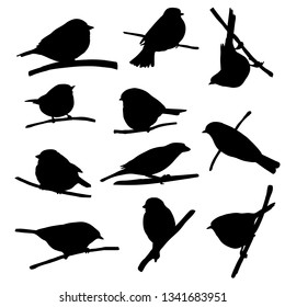 Vector silhouettes of bird sitting at tree branch, tits and sparrows, hand drawn songbirds, isolated nature design elements