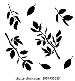 Vector silhouettes of the branch of trees, with leaves, black color, isolated on white background