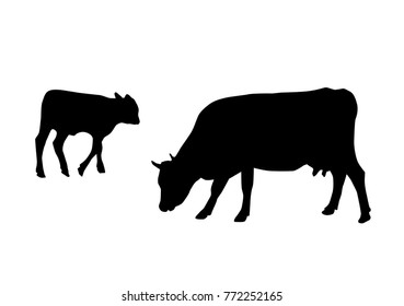 Vector silhouettes of cows, different poses, black color, isolated on white background