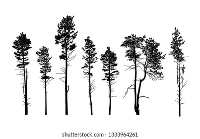 Vector silhouettes of different tall pine trees.