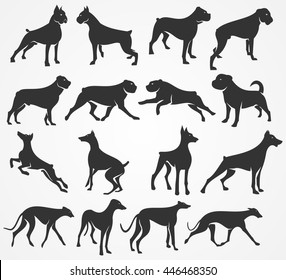 Vector silhouettes of dogs. Boxer, Rottweiler, Doberman and Greyhound