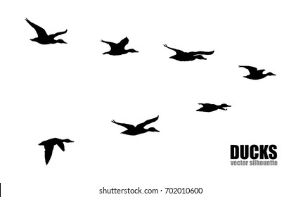Vector silhouettes of ducks
