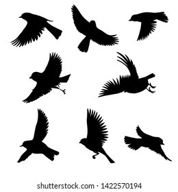 Vector silhouettes of flying birds, sketch of sparrows, hand drawn songbirds, isolated nature design elements