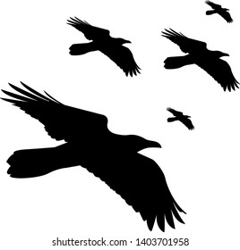 vector silhouettes flying ravens or crows, isolated on white background