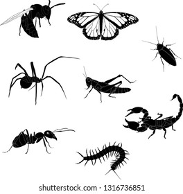 vector silhouettes of insects