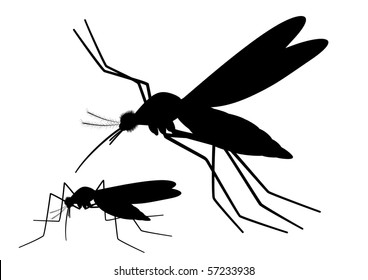 "Vector silhouettes of Mosquitoes pair, blood sucking insect.  ""Full compatible"""