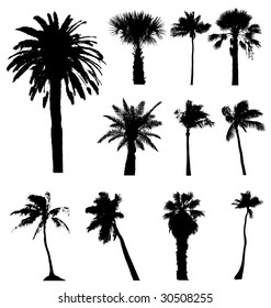 Vector silhouettes set of  tall California palm trees isolated on white background