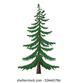 Vector Single Isolated Cartoon Pine Tree on White Background
