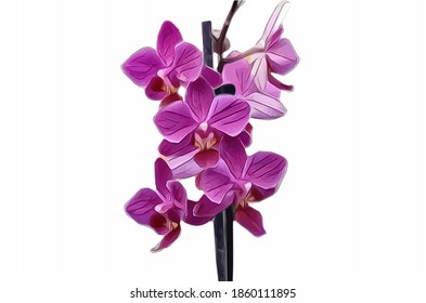 Vector of the single phalaenopsis orchid. Illustration of pink orchid flower isolated on white background.