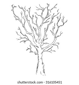 Vector Single Sketch Bare Tree