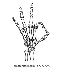 Vector skeleton hand showing gesture ok. Illustration isolated on white background