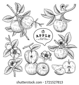 Vector Sketch Apple decorative set. Hand Drawn Botanical Illustrations. Black and white with line art isolated on white backgrounds. Fruits drawings. Retro style elements.