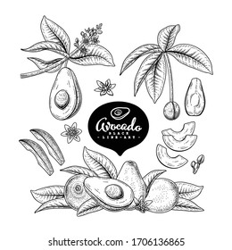 Vector Sketch avocado decorative set. Hand Drawn Botanical Illustrations. Black and white with line art isolated on white backgrounds. Fruits drawings. Retro style elements.