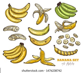 Vector sketch bananas various set. Bunches of fruit, half peeled, open and cut banana. Hand drawn colorful outline illustration