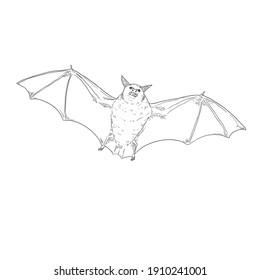 Vector Sketch Bat . Front View Illustration.