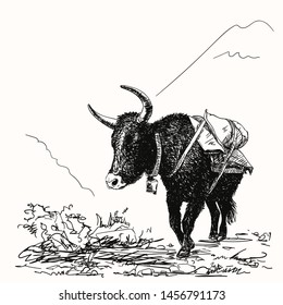 Vector sketch of black cow yak in Himalaya mountains, Hand drawn illustration