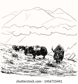 Vector sketch of black yak caravan at rest tied on rope to stone, Himalayas mountains, Hand drawn illustration