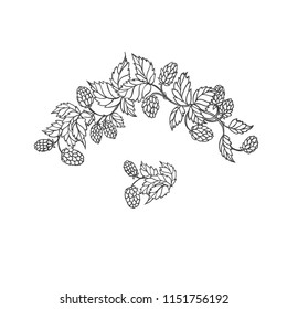 Vector sketch branch of hops. Symbol brewing and main component in preparation beer. Isolated black white outline illustration.