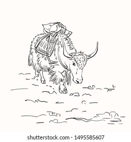 Vector sketch of cargo yak with big horns in Himalaya mountains, Hand drawn linear illustration