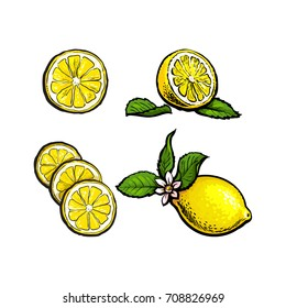 vector sketch cartoon colorful ripe lemon with slices, fruit object with leaves and flower set. Isolated illustration on a white background Fresh juicy cirtus. Healthy organic food full of vitamins