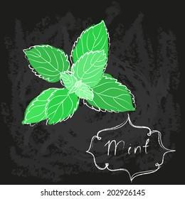 vector sketch chalk drawing of mint leaf bunch on blackboard