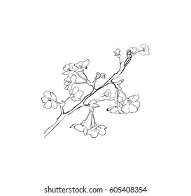 Sakura Tree Branch Sketch Cherry Blossom Stock Vector Royalty Free