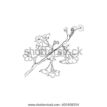 Vector Sketch Cherry Blossom Outline Sakura Stock Vector Royalty