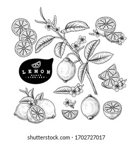 Vector Sketch Citrus fruit decorative set. Lemon. Hand Drawn Botanical Illustrations. Black and white with line art isolated on white backgrounds. Fruits drawings. Retro style elements.