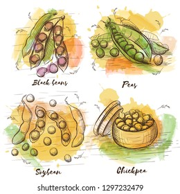 Vector sketch collection with beans for your design. Watercolor colorful set on white backdrop. Healthy food. Black beans, peas, chickpea and soybean.