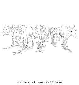 Vector Sketch Cow Herd