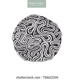 Vector sketch of hand drawn brain coral. Vintage underwater natural elements. Decorative sealife illustration on white background