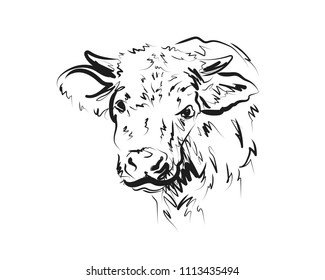 Vector sketch head cow