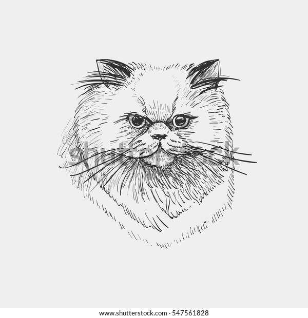 Vector Sketch Head Persian Cat Isolated Stock Vector Royalty Free 547561828