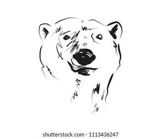 Vector sketch head of polar bear