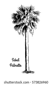 Vector sketch illustration. Black silhouette of Sabal Palmetto. Cabbage Palm drawing. Tropical flora native to USA, Cuba, Bahamas. Official state tree of Florida and South Carolina.