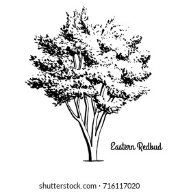 Vector sketch illustration of Eastern Redbud. Black silhouette of plant isolated on white background. Official state tree of Oklahoma.