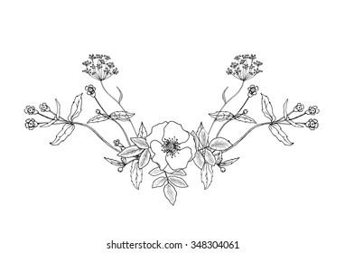Vector sketch illustration of flower composition