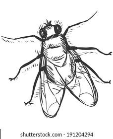 Vector Sketch Illustration - Fly