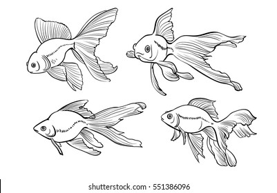 Vector sketch illustration of goldfishes isolated on white background.