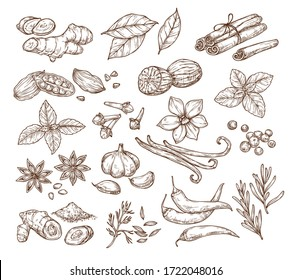 Vector sketch illustration of spices and herbs. Isolated on a white background. Ginger, cinnamon, vanilla, anise, basil, rosemary, turmeric. Use to create menus, packaging, patterns, prints.
