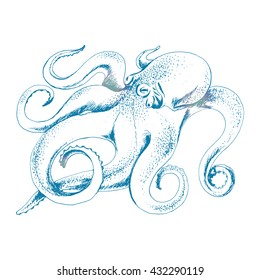 Vector sketch of octopus. Hand drawn animal illustration for print, card, banner, restaurant menu and other natural sea vintage design. Vector Octopus isolated of white.