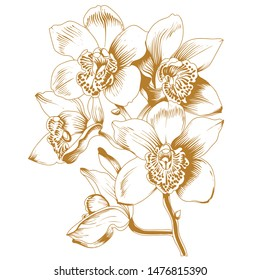 Vector sketch of orchid flower.Vector tropical orchid flower. Floral botanical flower. Isolated illustration element. Vector wildflower for background, texture, wrapper pattern, frame or border.