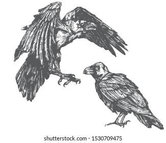 Vector sketch of raven. Illustration of corbie