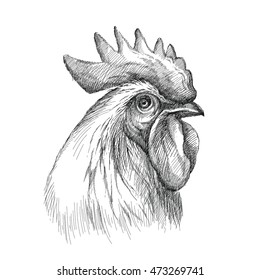 drawing rooster head images stock photos vectors shutterstock