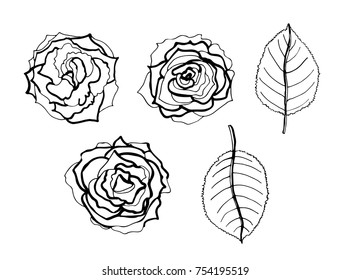 A vector sketch of  roses and leaves. 5 floral arrangements. Hand drawn top view. Design for greeting cards and invitations for wedding, birthday, Valentine's Day, Mother's Day