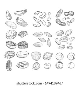 Vector Sketch Set of Nuts. All Types of Edible Nuts. Healthy snack. Organic meal.