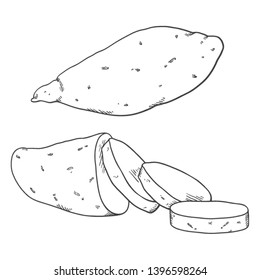 Vector Sketch Sweet Potato Yam. Whole and Sliced