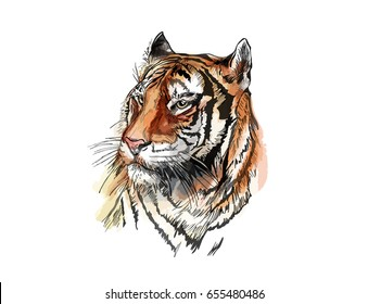 Line Drawing Of A Tiger S Face : Tiger sketch images stock photos vectors shutterstock